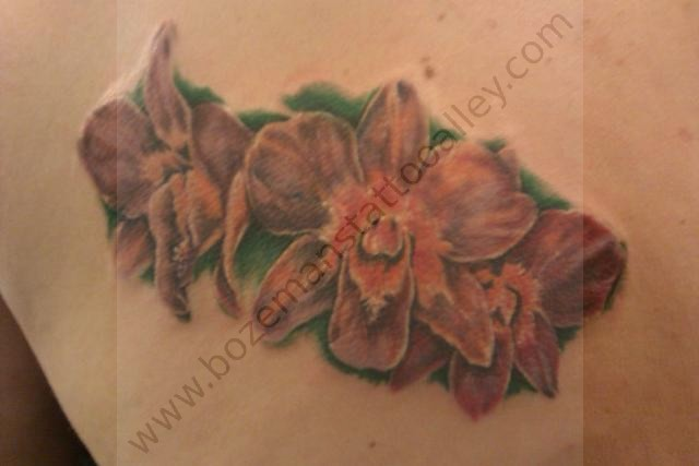 Orchid (cover up)